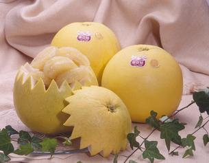 晩白柚(フルーツ)の写真素材 [FYI00088976]