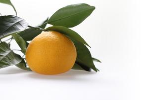 白バック 葉のついたオレンジの写真素材 [FYI00089085]