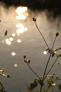 河原の写真素材 [FYI00089320]