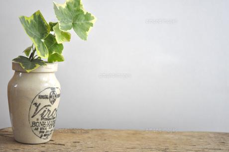 アンティークボトルとアイビーの写真素材 [FYI00089340]