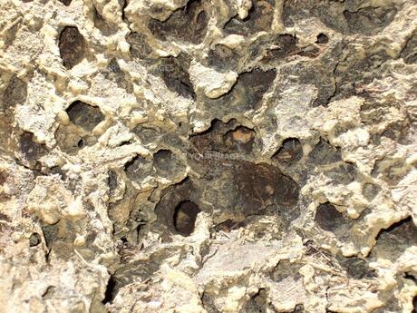 蟻塚の表面の写真素材 [FYI00089404]