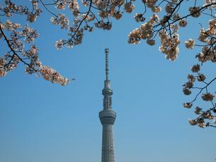 スカイツリーと桜の写真素材 [FYI00089456]