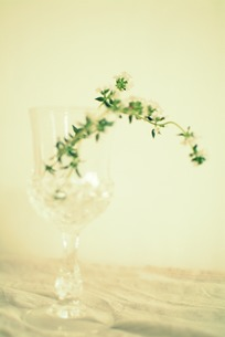 花の写真素材 [FYI00089528]