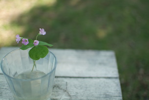 小さい花の写真素材 [FYI00089536]