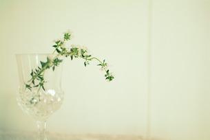 グラスと花の写真素材 [FYI00089537]