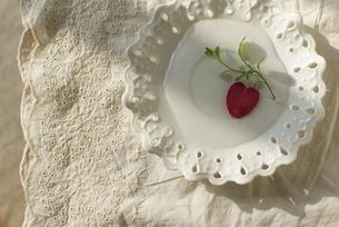 お皿の上の花びらの写真素材 [FYI00089538]