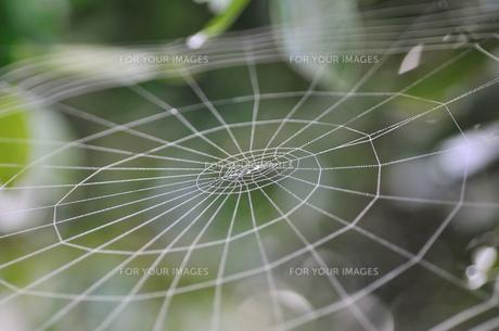 蜘蛛の巣の写真素材 [FYI00089561]