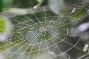 蜘蛛の巣の素材 [FYI00089561]