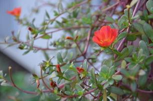 小花の写真素材 [FYI00089571]