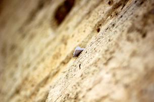 嘆きの壁003の写真素材 [FYI00090150]