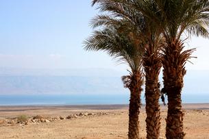 イスラエル/死海028(死海付近)の写真素材 [FYI00090178]