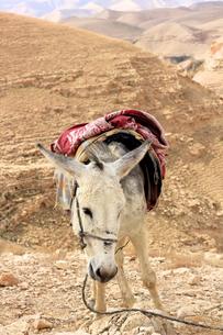 驢馬/砂漠/イスラエル001の写真素材 [FYI00090229]