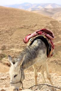 驢馬/砂漠/イスラエル002の写真素材 [FYI00090231]