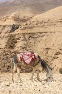 驢馬/砂漠/イスラエル009の写真素材 [FYI00090239]