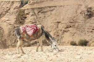 驢馬/砂漠/イスラエル007の写真素材 [FYI00090246]