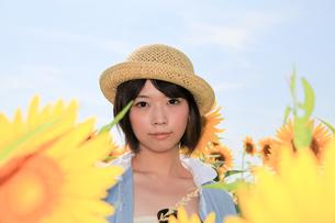 Princess MAIKO Benicio/向日葵畑シリーズの写真素材 [FYI00090484]