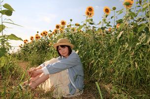 Princess MAIKO Benicio/向日葵畑シリーズの写真素材 [FYI00090518]