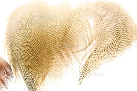 羽根の素材 [FYI00090665]