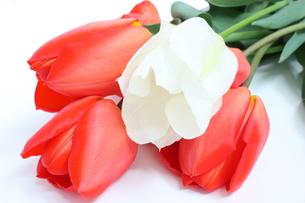 チューリップの花束の写真素材 [FYI00090677]