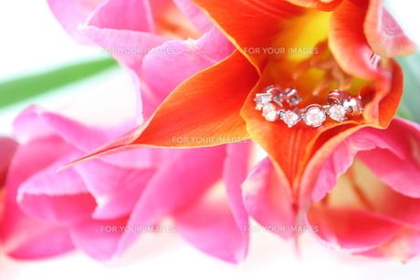 チューリップとダイヤモンドの写真素材 [FYI00090715]