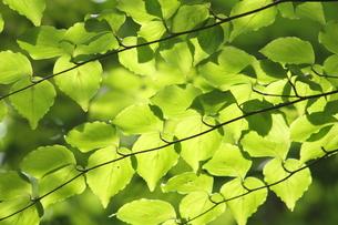 深緑の写真素材 [FYI00090736]