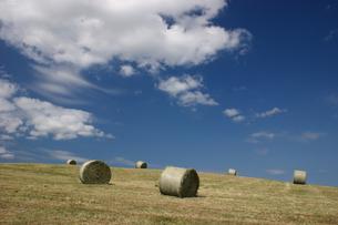 牧草ロールの丘の写真素材 [FYI00090762]