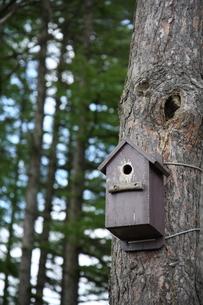 森の巣箱の写真素材 [FYI00090805]