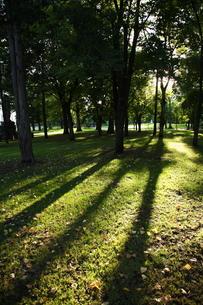 公園の夕景の写真素材 [FYI00090877]