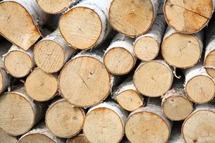 シラカバの薪の写真素材 [FYI00091201]