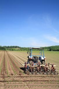 夏の農場の写真素材 [FYI00091327]