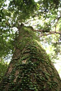 大樹の幹の写真素材 [FYI00091474]