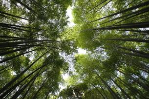京の竹林の写真素材 [FYI00091480]
