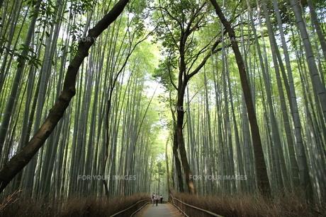 京都竹林観光の写真素材 [FYI00091487]