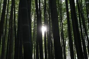 竹林の瞬き2の写真素材 [FYI00091489]