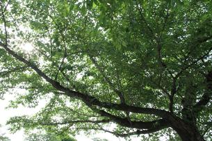 greenwoodの写真素材 [FYI00091499]