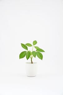 小型の観葉植物の写真素材 [FYI00091504]