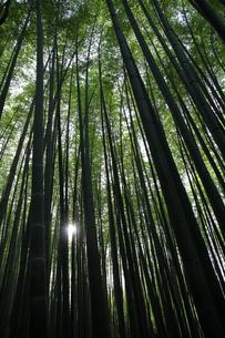 竹林の瞬き1の写真素材 [FYI00091506]
