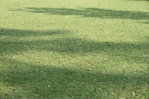 晴れた日の芝生の写真素材 [FYI00091520]