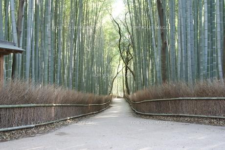 嵯峨野の竹林の写真素材 [FYI00091553]