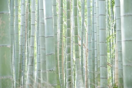 竹林の素材 [FYI00091559]