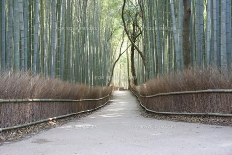 嵯峨野の竹林の写真素材 [FYI00091563]