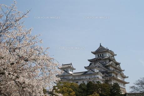 姫路城の写真素材 [FYI00091646]