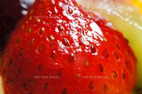 イチゴの写真素材 [FYI00091665]