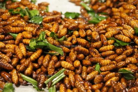 昆虫食の写真素材 [FYI00091709]