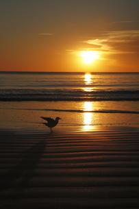 夕暮れとカモメの写真素材 [FYI00091944]
