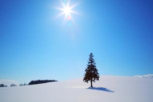 雪原で照らされるクリスマスツリーの木の素材 [FYI00092061]