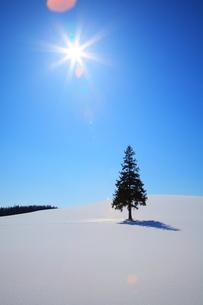雪原で照らされるクリスマスツリーの木の素材 [FYI00092094]