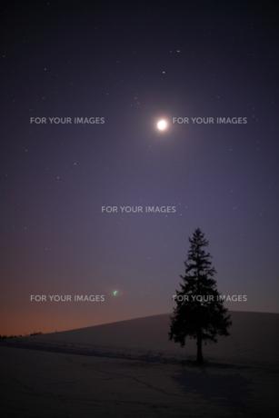 月夜のクリスマスツリーの写真素材 [FYI00092102]