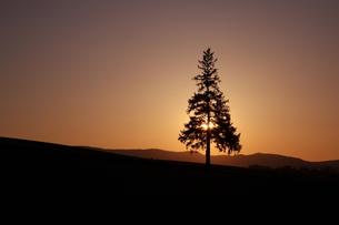 クリスマスツリーに隠れる夕陽の素材 [FYI00092104]