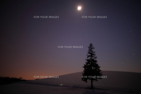 月夜のクリスマスツリーの木の写真素材 [FYI00092134]
